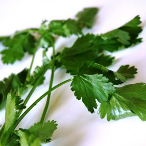 coriander-leaves-herb